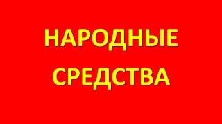 видео Жимолость кавказская