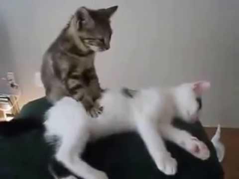 videos para whatsapp engraçado -videos engracados 2013 - gatos animais