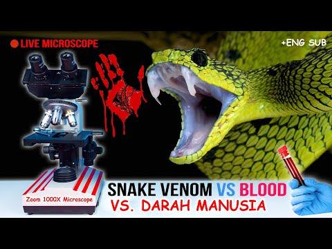 BISA ULAR Vs DARAH | Human Blood Vs Snake Venom In Microscope Zoom 1000X (Cobra U0026 Viper)