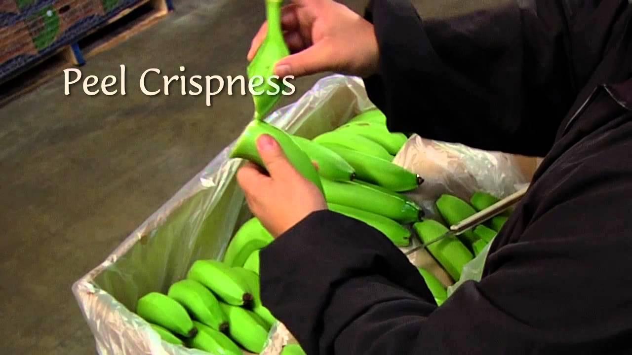 Dole Banana Ripening Process Youtube
