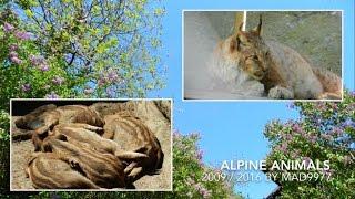 LIVING POSTCARD - ALPINE ANIMALS