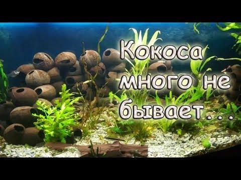 Быстрый способ как подготовить КОКОС для аквариума.