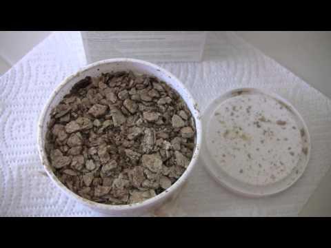 Beneficial Nematodes, Organic Grub Control Part 2