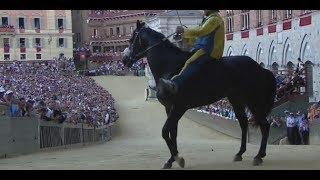 Palio di Siena:    PROTESTE DI TORNASOL