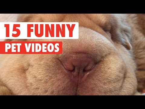 15 Funny Pet Videos Compilation 2017