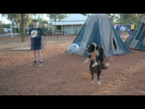Dog doing tricks with soccer ball