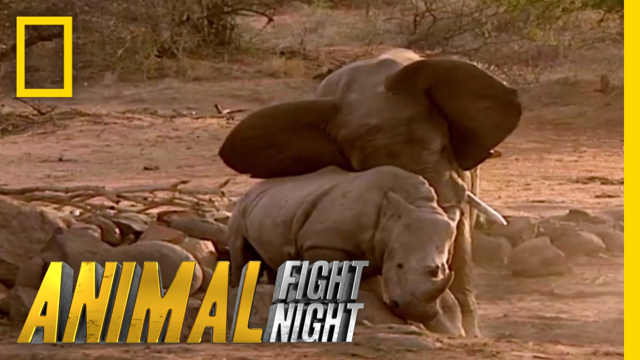 Watch Animal Fight Night online | YouTube TV (Free Trial)