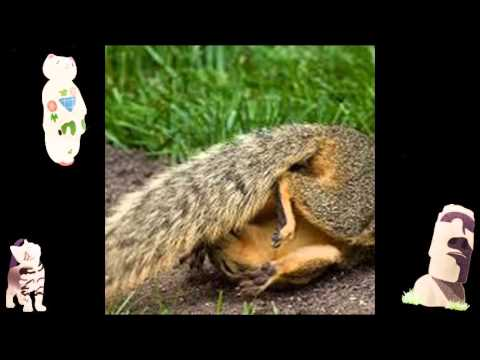 funny animal jokes dirty