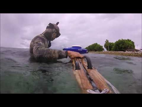 SHALLOW REEF SPEARFISHING [ep1] Reef Fishes!