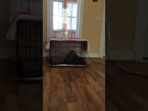 Copper the cat escapes her cage
