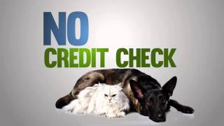 Arizona Pet Vet Payment Plans - A Family Of Animal Hospitals