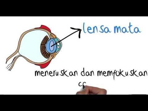 Panca Indera Penglihat Bagian dan Fungsi Dari Mata - YouTube
