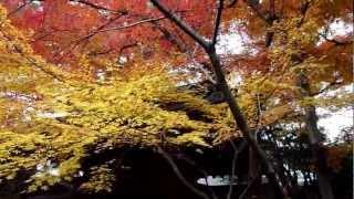 [四季の寺]本土寺の紅葉2010