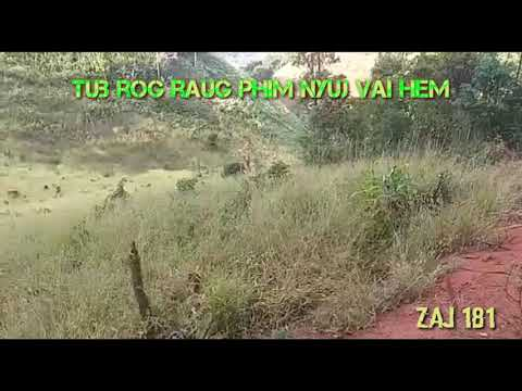 Tub rog raug phim nyuj vai hem 2/1/2919 thumbnail