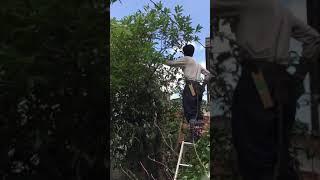 庭木の剪定・庭の音 斉藤吉一.