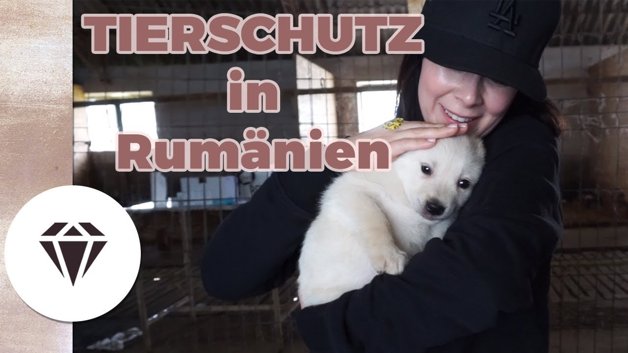 Rumänien Auswandern
