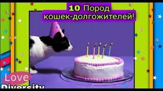 10 Пород кошек долгожителей!
