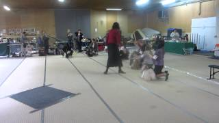 Best Females At Finnish Shih Tzu Club Show 2012