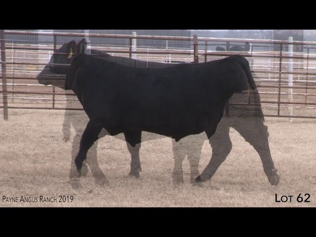 Payne Angus Ranch Lot 62