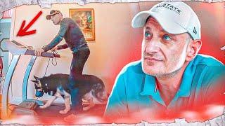 Агрессия на собак, беговая дорожка и ходьба рядом (Нью-Джерси США)