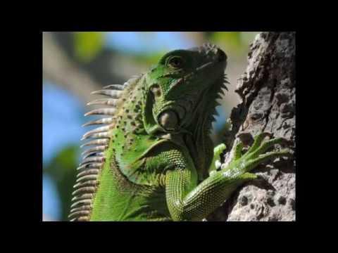 Wildlife in Honduras