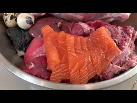 oliang-the-pit-bull-eats-salmon-sashimi-combo-[asmr]- -b.a.r.f-diet- -mukbang-犬が生の肉を食べる- -4k