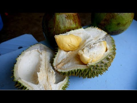 Tasting DURIAN the STINKIEST FRUIT ever in KUALA LUMPUR | Food and Travel Channel | Malaysia