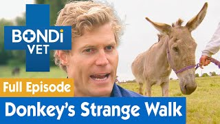 Orphaned Donkey Develops An Awkward Walk | FULL EPISODE | E03 | Bondi Vet