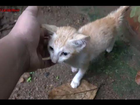 Petting Abandoned Kitten
