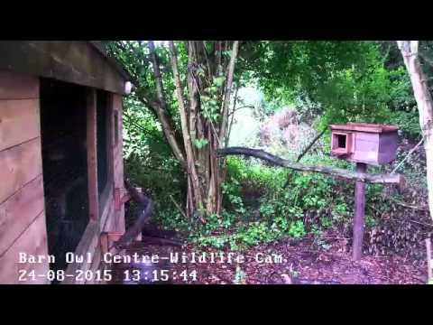 Barn Owl Centre's Live Webcams