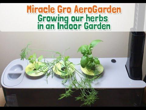 Easy Indoor Garden with Miracle Gro AeroGarden YouTube