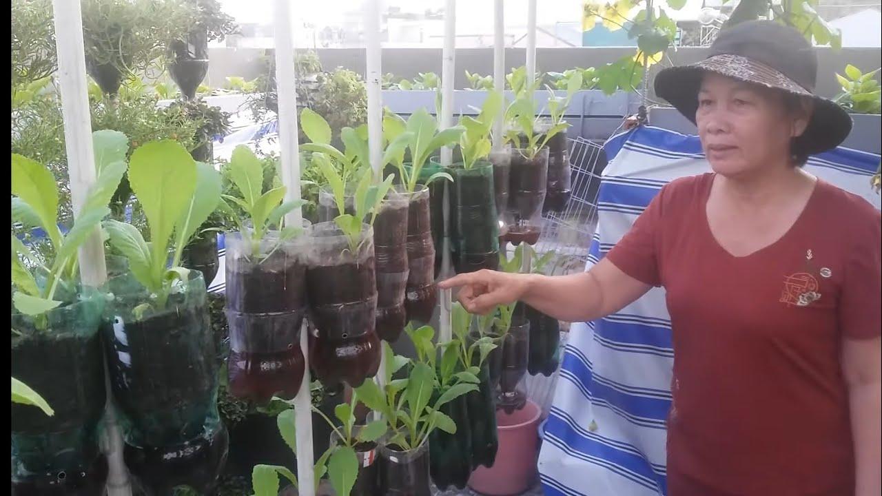 Tái chế chai 1,5lit , làm 2 tầng trồng cải Bẹ xanh rất dễ | Khoa Hiên 301