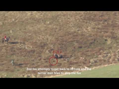 Jedforest Hunt Illegal Fox Hunting Footage