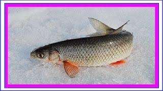 Риболовля на Іртиші 08.04.2017 р. Ханти-Мансійськ