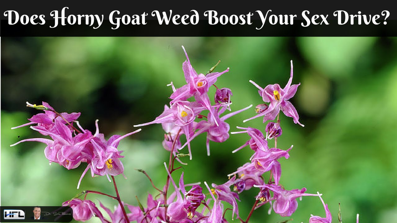 How Effective is Horny Goat Weed for Increasing Your Libido and Sex Drive?