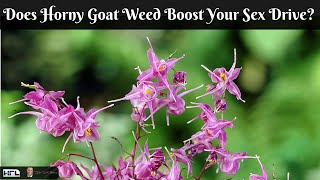 How Effective is Horny Goat Weed for Increasing Your Libido and Sex Drive? - by Dr Sam Robbins