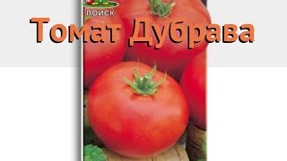 Томат обыкновенный Дубрава (dubrava) 🌿 томат Дубрава обзор: как сажать семена томата Дубрава