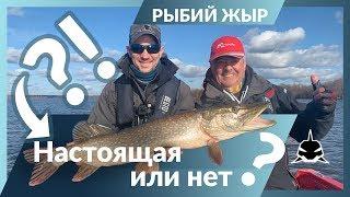 Осенняя рыбалка на щуку и судака Коряжники Чебоксарского водохранилища Рыбий жЫр 6 сезон