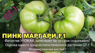 Фитактив УРОЖАЙ, затягивает ли он срок созревания? ПИНК МАРГАРИ F1. Оценка растения
