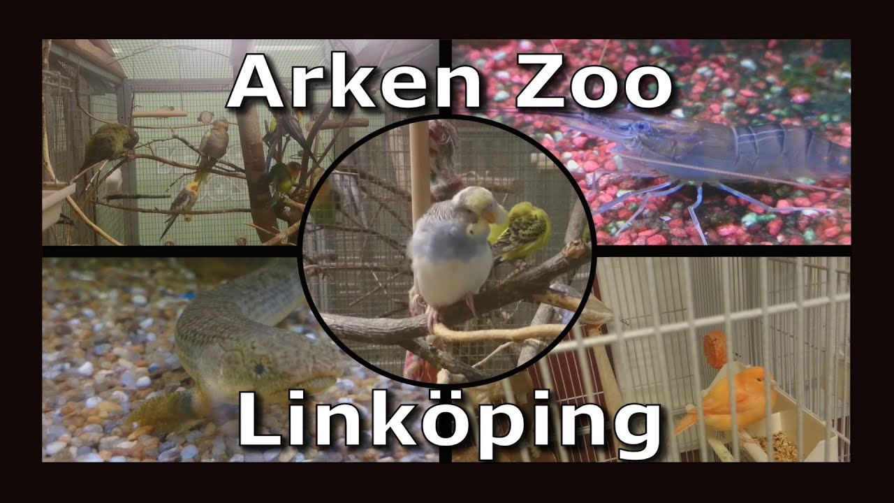 tdg animals arken zoo link ping youtube