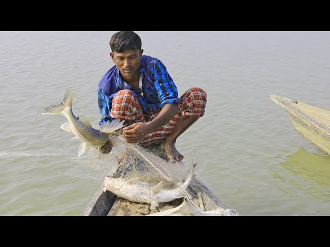 natural fishing in bangladesh | fish catching