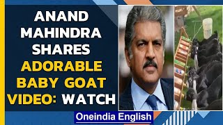 Anand Mahindra's video of baby goats is winning hearts on Twitter| Oneindia News