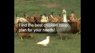Where To Get Chicken Coops For Sale Cheap | Buy Designs & Plans Or Chicken Coops For Sale Cheap