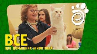 Что Мы Знаем Про Кошек (Часть Вторая)?. Все О Домашних Животных