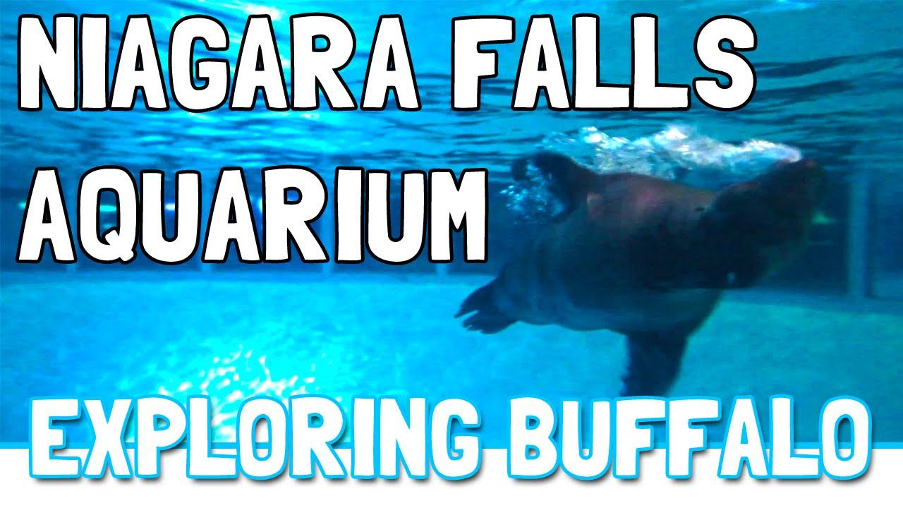 Fish aquarium in niagara falls - Niagara Falls Aquarium Exploring Buffalo