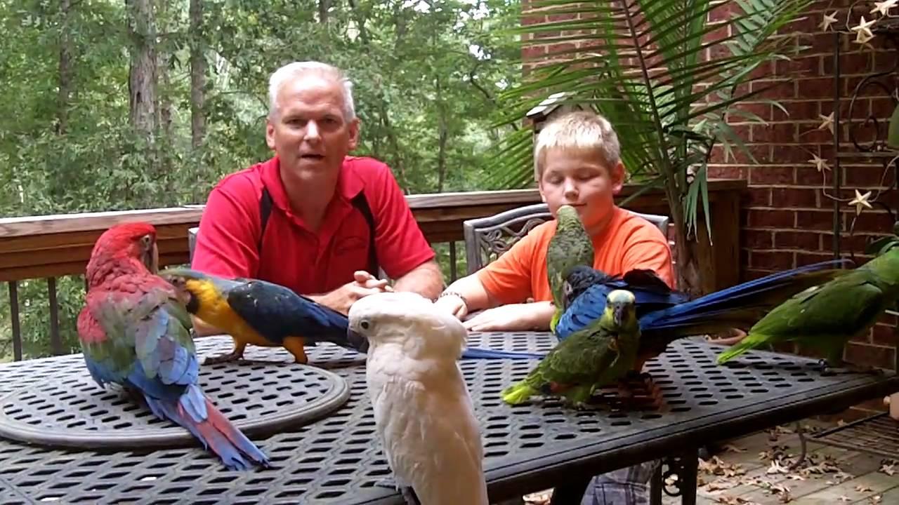 Image result for live parrots for sale