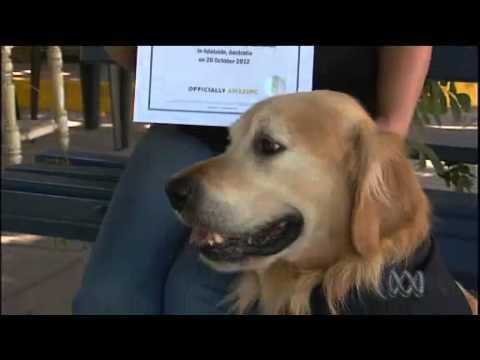 Loudest Dog Bark In The World - Guinness World Record