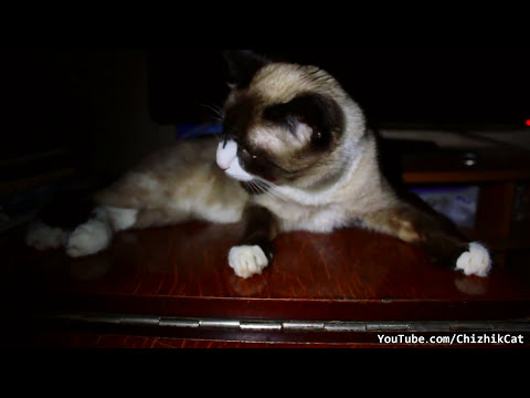 Cat Licks Kitten Off Table | Grooming Fail