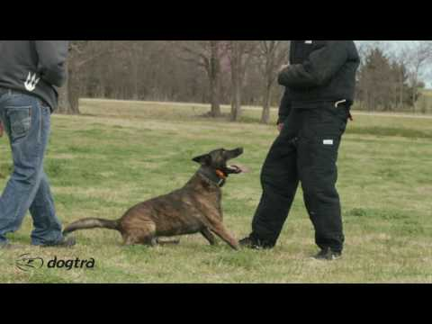 Ep.8 - K9 Dog Training with Mike Ritland: Bite Confidence