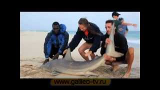 Галилео. Как поймать акулу?